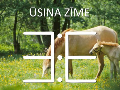 usina_zime